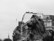 Landseer's Lions