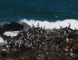 Rockin' Pelicans