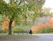Autumn In The Park, November 2020