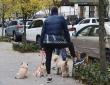 Dog Walkers, December 2020