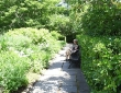 Conservatory Garden Path, May 2021
