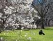 Spring Hope, April 2020