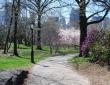 Spring Shadows, Central Park