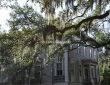 Spanish Moss, Savannah