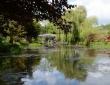 Waterlily Pond