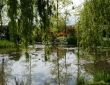 Weeping Reflections
