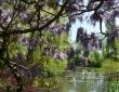 The Pond Through Wisteria