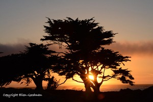 SunsetPacificGrove