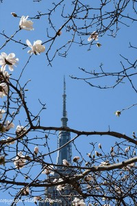 SpringComesToNYC