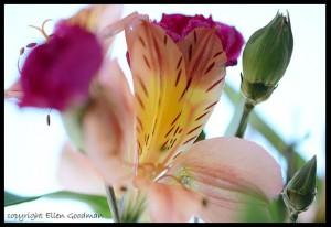 FloralStillLife