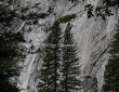Tree Imprint